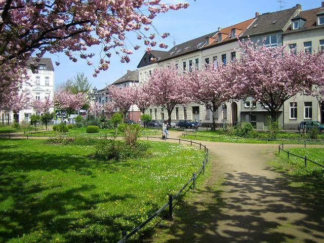 Kirschblütenfest krefeld 2015
